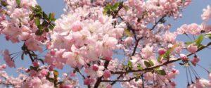 Norfolk Churches Trust Spring Newsletter